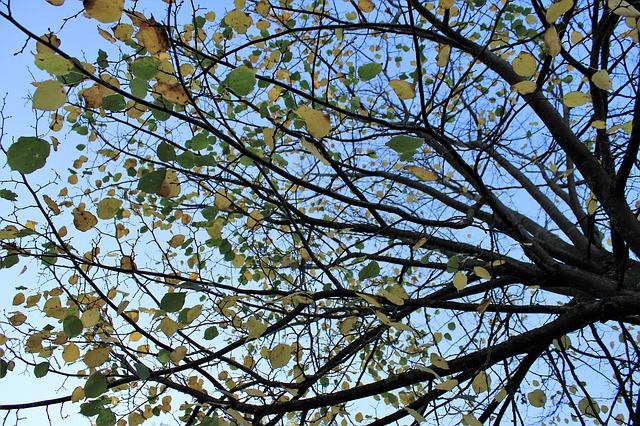 z poloviny opadaný strom